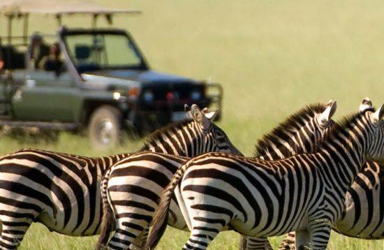 tour a kenia safari viaje