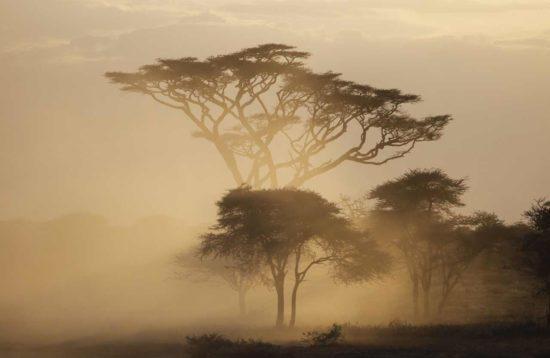 tour en tanzania klimanjaro montana