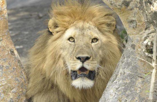 tour en tanzania ngorongoro y tarangire completo