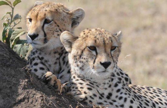 tour en tanzania y ngorongoro completo africa