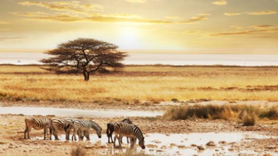 tour en zimbabue camelthorn kalahari lodge