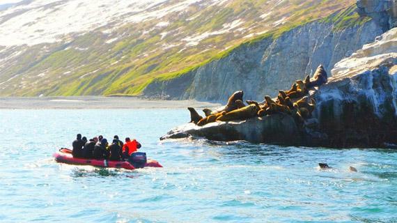 bahia en rusia focas