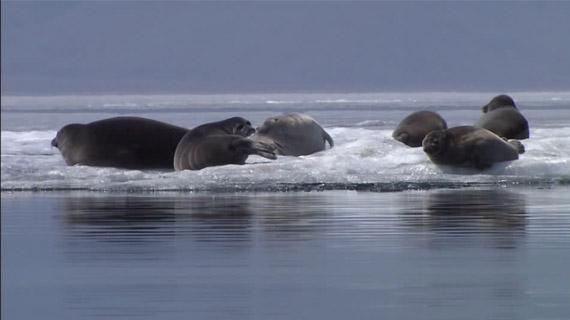 focas en el lago baikal
